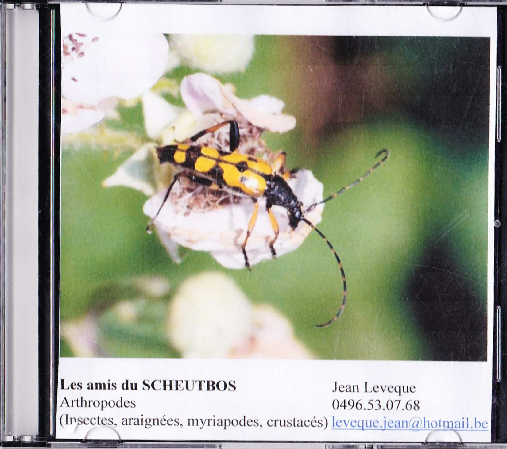 1 cd arthropodes