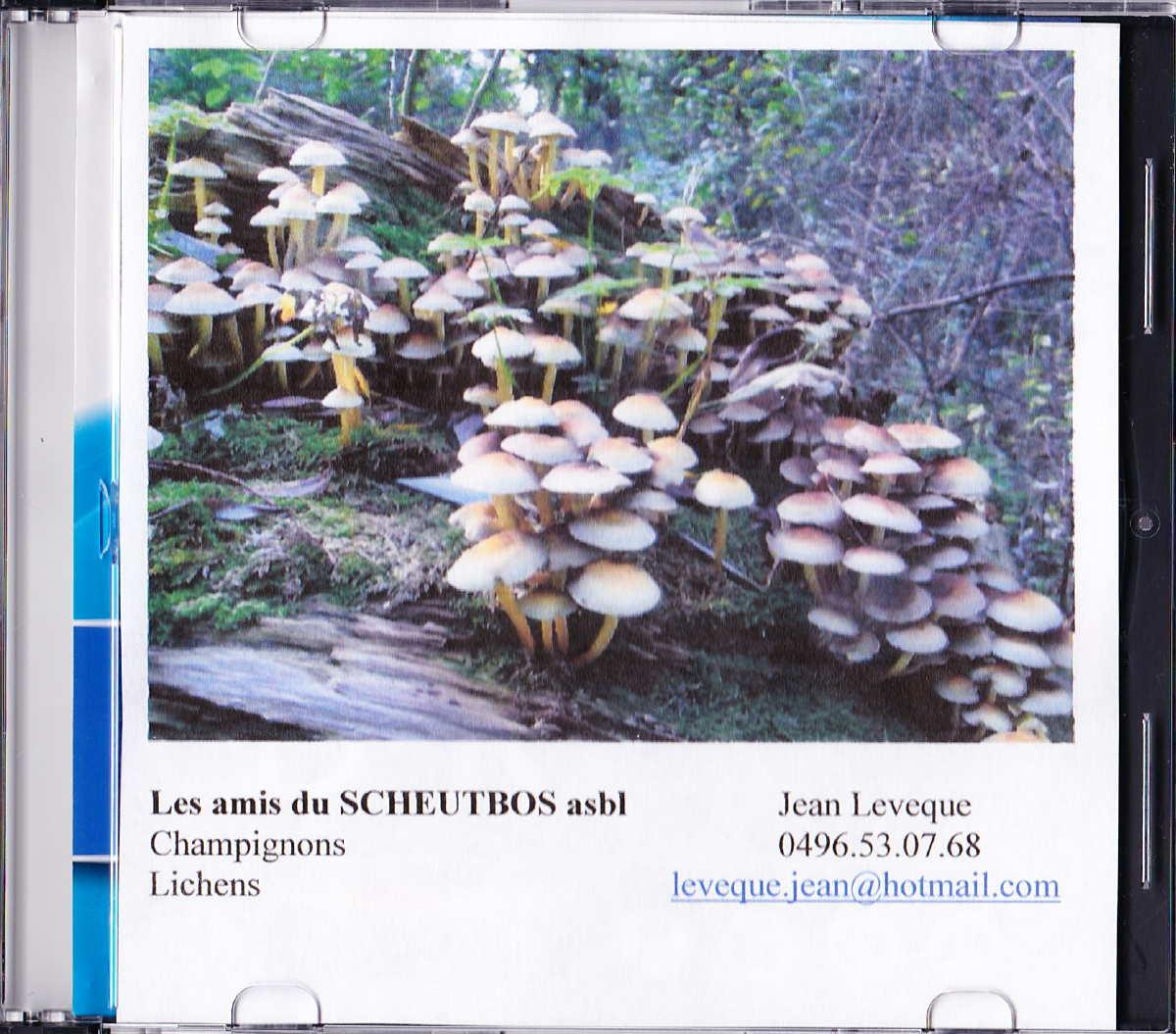 4 cd champignons